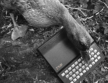 Duck Pecking At A Keyboard